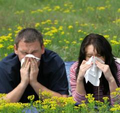poradnie alergologiczne